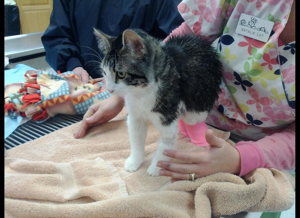 Photo courtesy CATS Cradle Rescue and Adoption