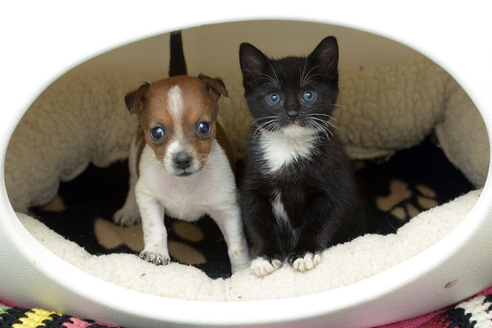 These heartwarming pictures show an abandoned puppy and a rescued kitten that are so close they think they are sisters. The c