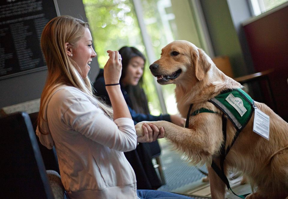 Hooch, a 19-month-old golden retriever, is happy to give Melissa Bonnington, a law student at Emory University, a helping paw