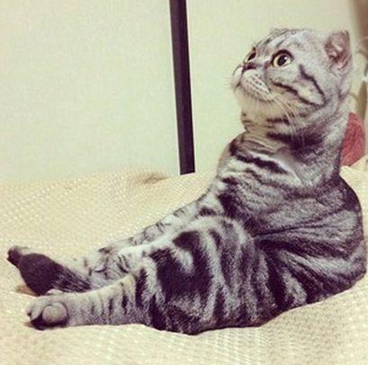 "<a href=""https://www.huffpost.com/entry/shishi-maru-scottish-fold-cat-instagram-star-photos_n_2019833#slide=1688104"">Shishi-M"