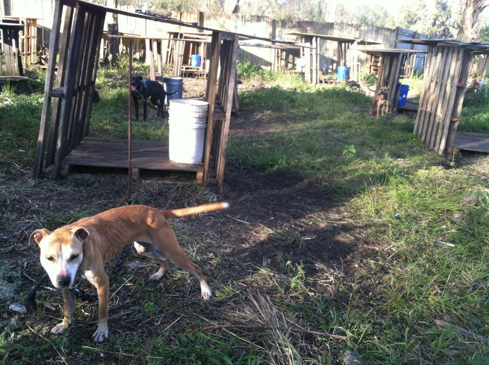 """<a href=""""http://www.hillsboroughcounty.org/index.aspx?nid=113"""">Hillsborough County Animal Services</a>"""