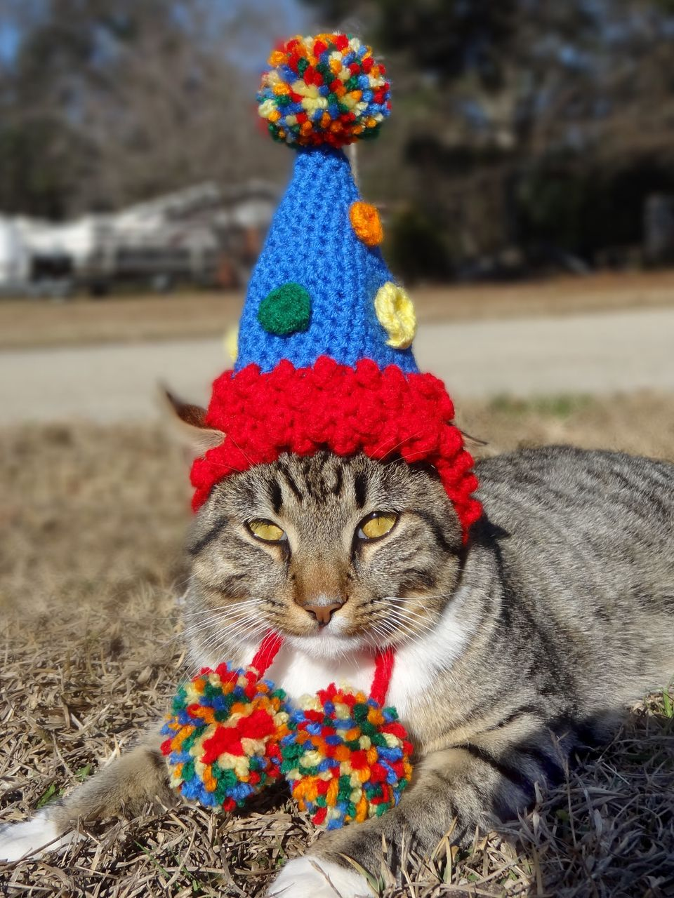 Birthday party cat hat.  These adorable pieces of headgear for moggies for make any feline the indisputable leader of the gan