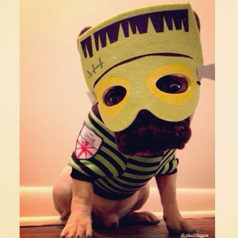 "This <a href=""http://instagram.com/p/fUuMvRAxiH/"" target=""_blank"">French bulldog</a> is monstrously cute."