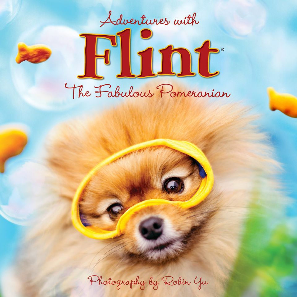 "Flint The Pomeranian Is Your New Favorite Dog (Robin Yu/<a href=""http://www.flintthepomeranian.com/"">FlintThePomeranian.com</"