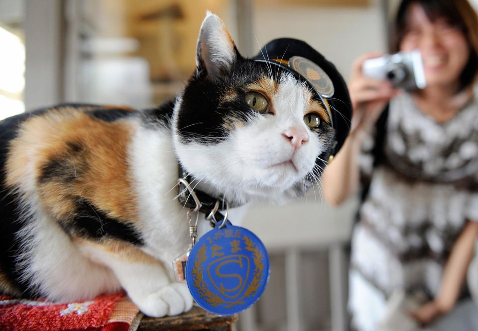 Wakayama Electric Railway in Japan has a cat as a station master. Tama was appointed in 2007 and her main duties are to welco