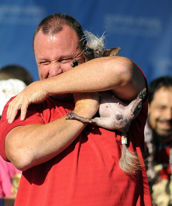 Jason Wurtz squeezes SweePee Rambo, a Chihuahua/Chinese Crested mix at The World's Ugliest Dog Competition in Petaluma, Calif