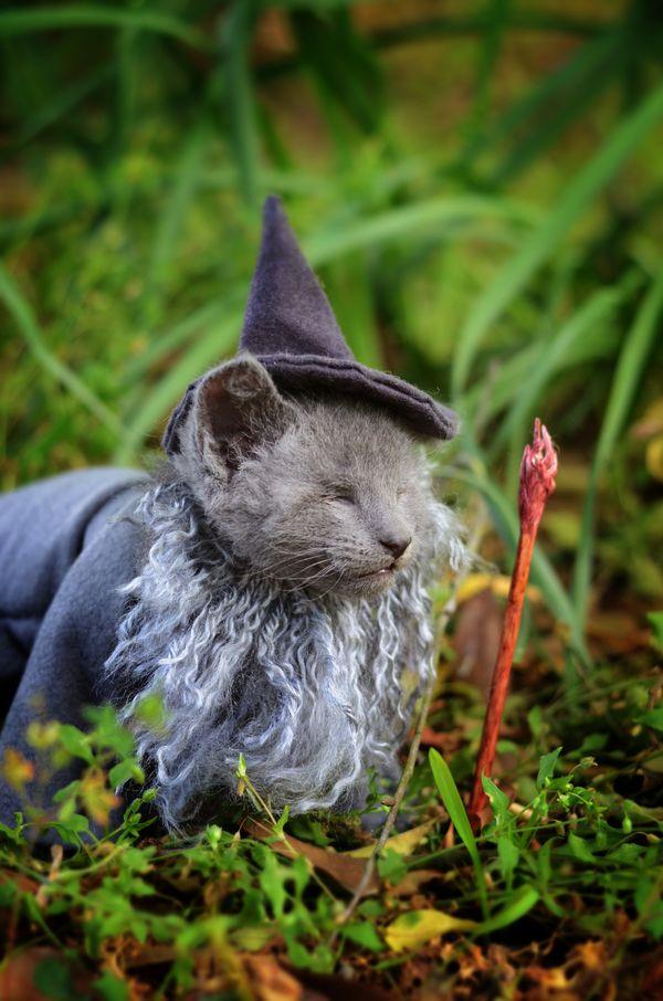 """"""" 간달프 역할을 하고 있는 고양이는 아주 착한 회색 수컷 고양이에요 눈이 없이 태어났지만, 간달프 데일리라고 해도 될 만큼의 특집을 소화해냈죠."""""""