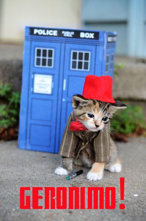 """""""고양이들은 모델로 카메라 앞에 설 때, 놀라울 정도로 반응을 잘합니다. 사람과 노는 것에 익숙하고 매너도 매우 좋은 편입니다. """""""