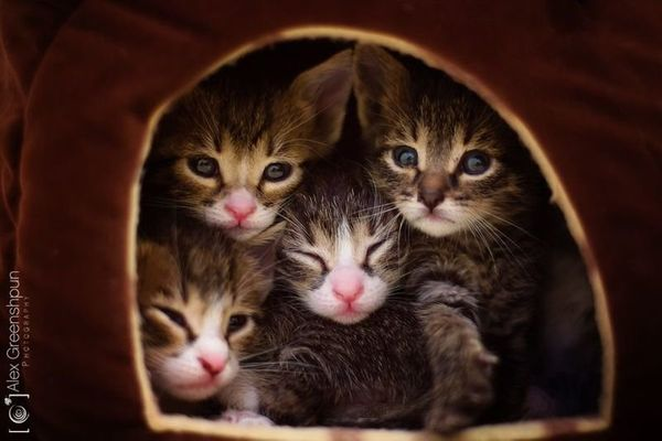 "Here are the rescue kitties<a href=""https://www.behance.net/gallery/18301283/The-Five-Wonders-a-rescue-story"" target=""_blank"""