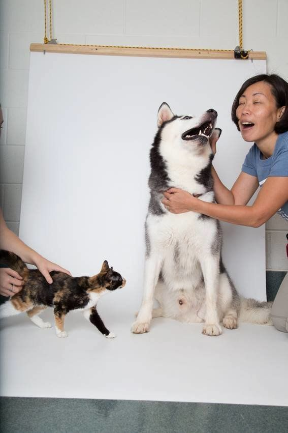 Assistants Annie Lim (right), whose idea it was to place Kim under Ninja's legs, and Jenny Parada (left) help wrangle the fur