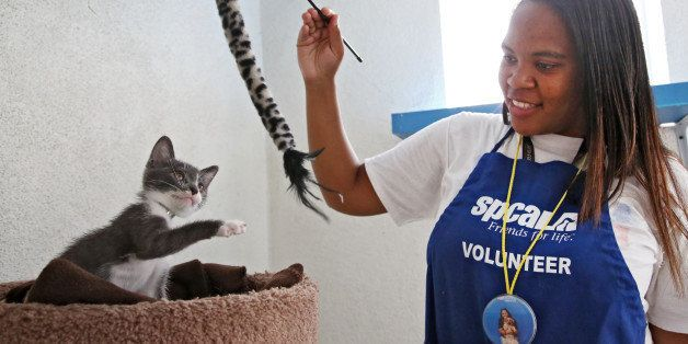 In this Sept. 5, 2014 photo, Jourdan Giron, of Lawndale, Calif., a shelter volunteer at the Los Angeles SPCA adoption center,