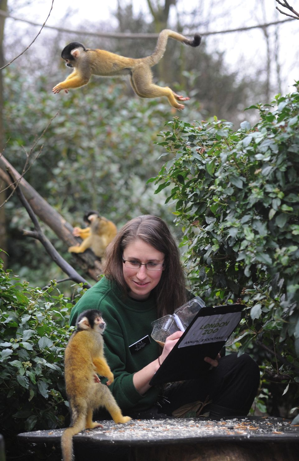 Zoo keeper Kate Sanders inside the squirrel monkey enclosure at London Zoo during the annual stocktake of animals.
