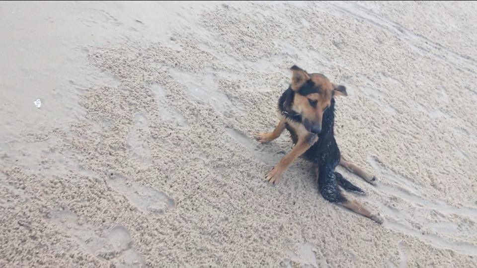 A photo of Leo on the beach.