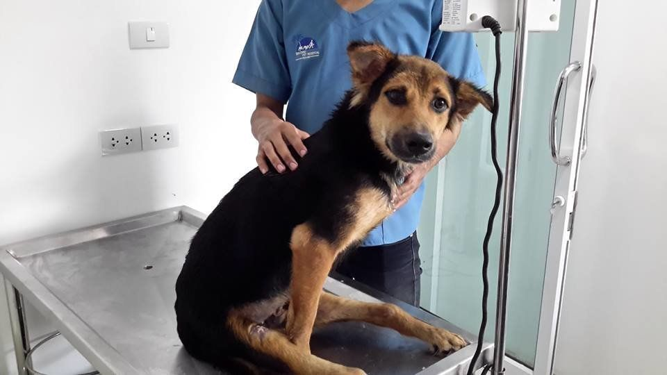 Leo at a veterinarian hospital in Thailand.