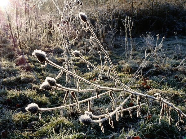 Hard frost at Clayfield Copse, Berkshire
