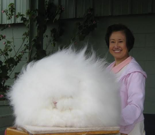 "Betty Chu, a professor emeritus at San Jose State University, told The Huffington Post that she <a href=""http://ncag.blogspot"