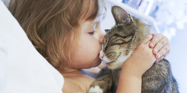 30ec5f6177654 The 10 Incredible Ways Your Cat Shows You Love | HuffPost