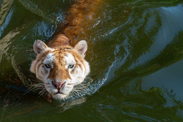 Το top 10 των ζώων που ευθύνονται για τους περισσότερους θανάτους