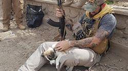 Ce soldat adopte le chiot qu'il a sauvé des décombres en