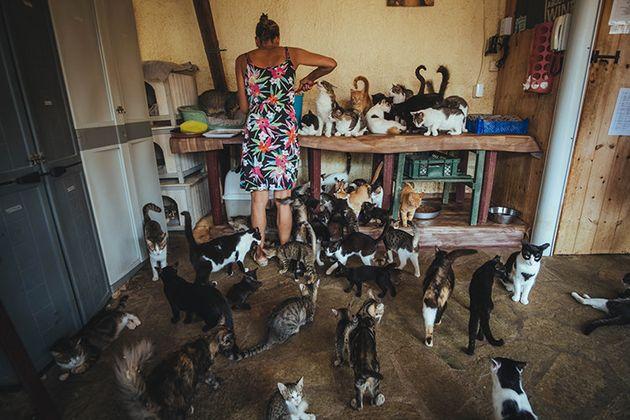 Ας δείξουμε #Sympónia για τις γάτες της