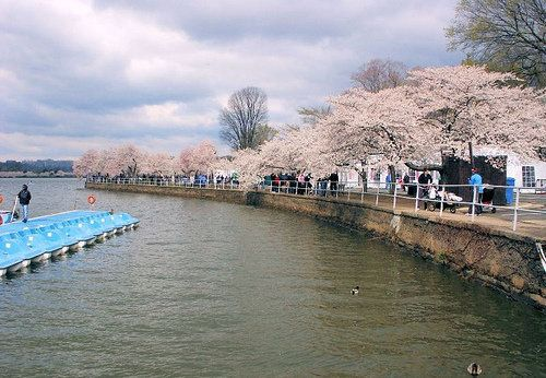 """Enjoy the peak bloom at your own pace away from the crowds. Boats are available for 2 and 4 passengers, <a href=""""http://www.t"""