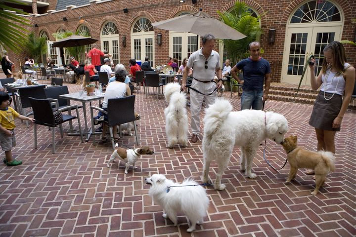 ALEXANDRIA, VA - JUNE 30, 2009: Dogs and their owners enjoy Doggie Happy Hour at Hotel Monaco. Every Tuesday and Thursday nig