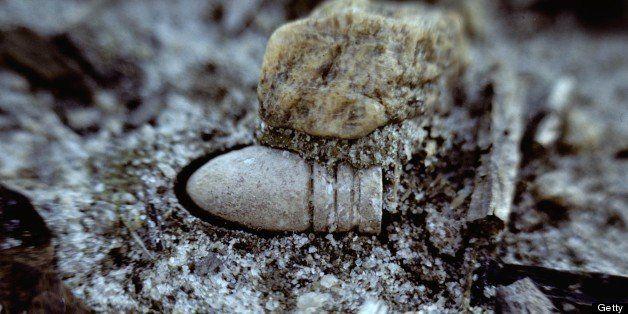 A close view of a Civil War minie ball in the dirt of a cornfield.