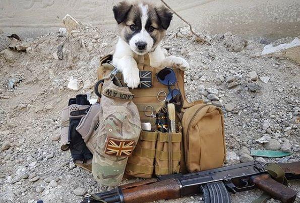 Soldat rettet Welpen im Krieg, 7 Monate später wird es
