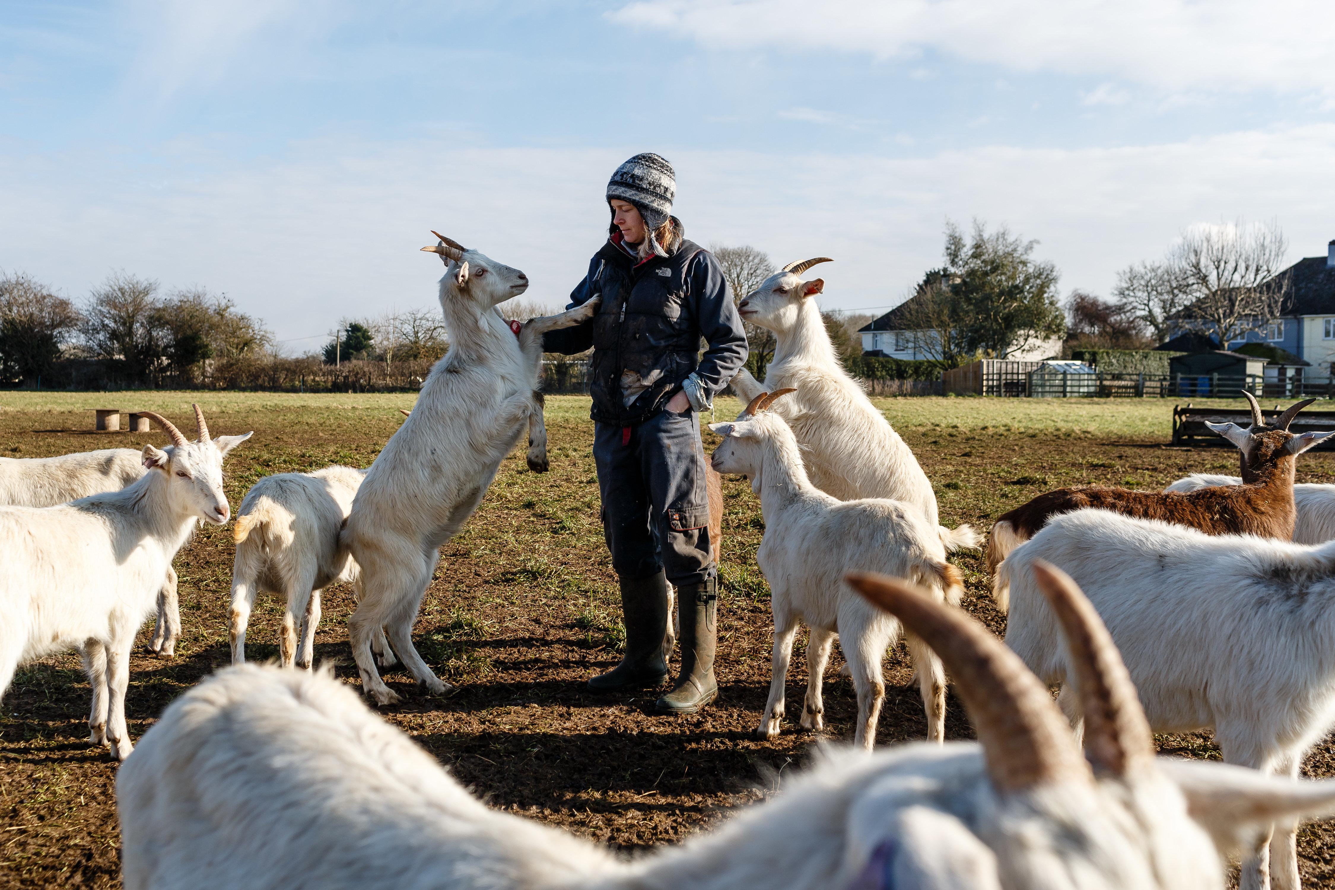 Warum ausgerechnet Ziegenfleisch den Fleischkonsum revolutionieren