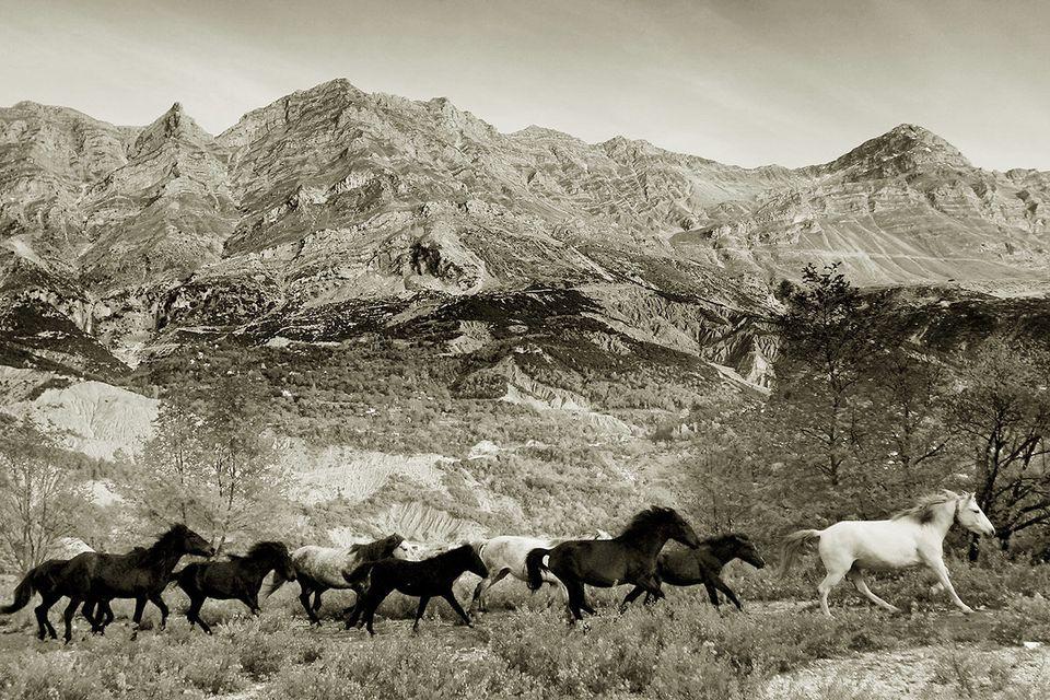 Άλογα της Πίνδου κοντά στο χωριό Καταρράκτης