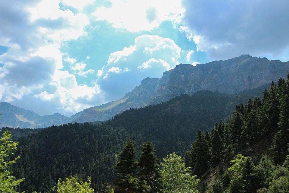 Το ελατοδάσος των Μελισσουργών, κοντά στο ορειβατικό καταφύγιο