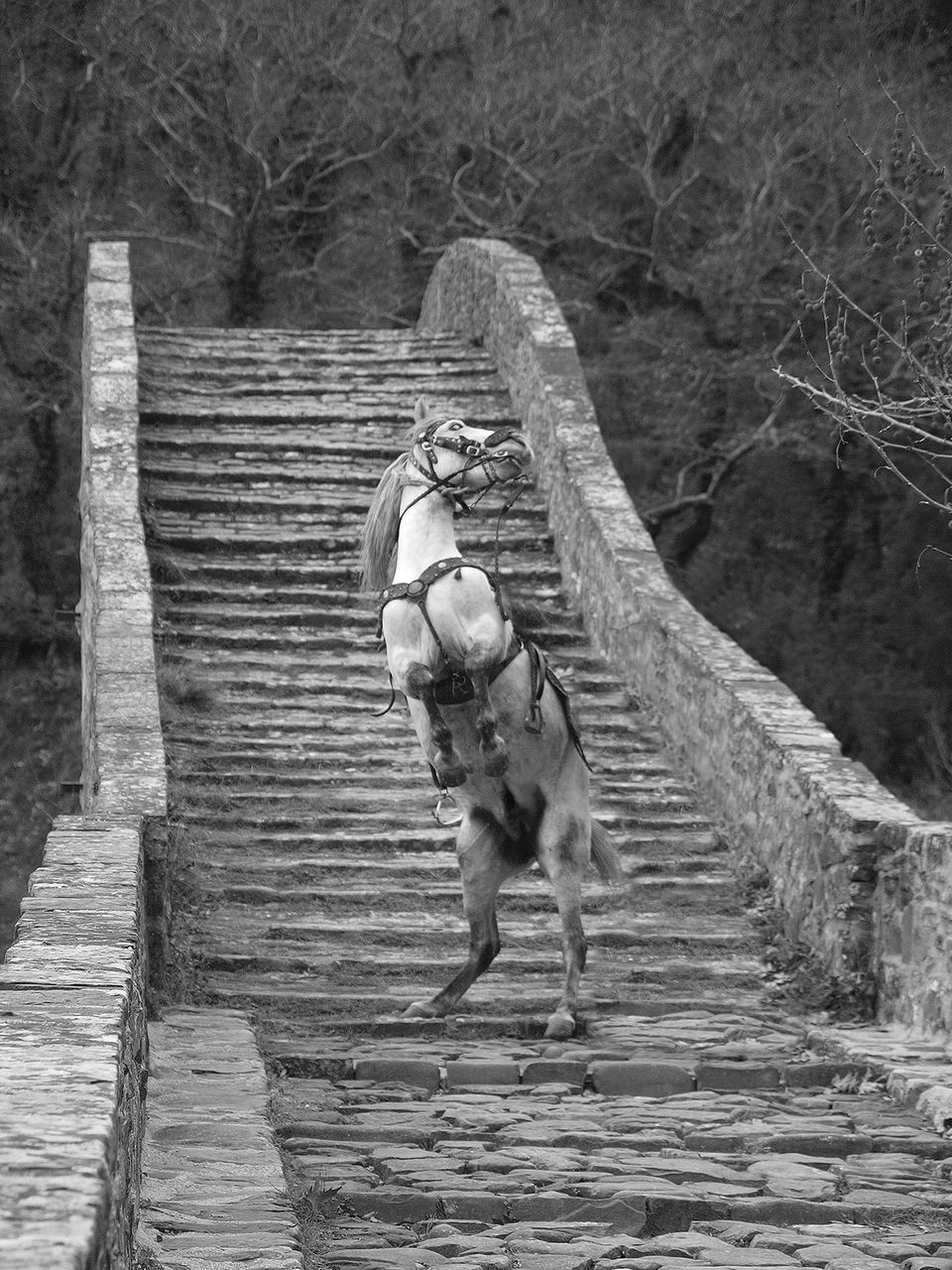 Γέφυρα Πλάκας