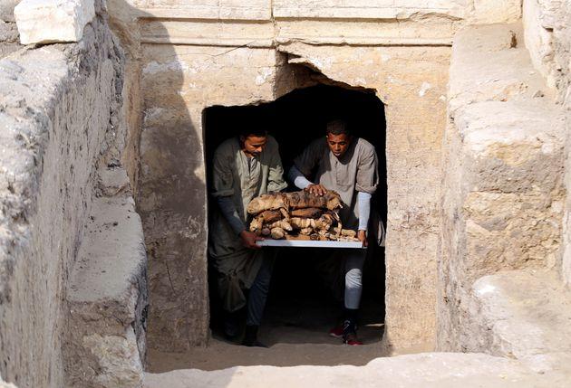 이집트 고대 무덤에서 수십 마리의 고양이 미라가