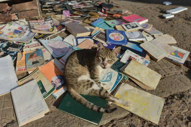 Άνδρας πέθανε από λύσσα μετά από δάγκωμα γάτας στο Μαρόκο