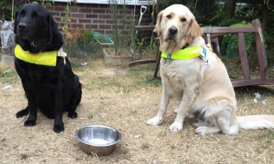Mann muss Blindenhund weggeben, weil Nachbar ihn verpetzt