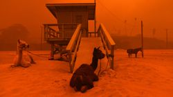 Rescuers Work To Evacuate Hundreds Of Animals As California Wildfires
