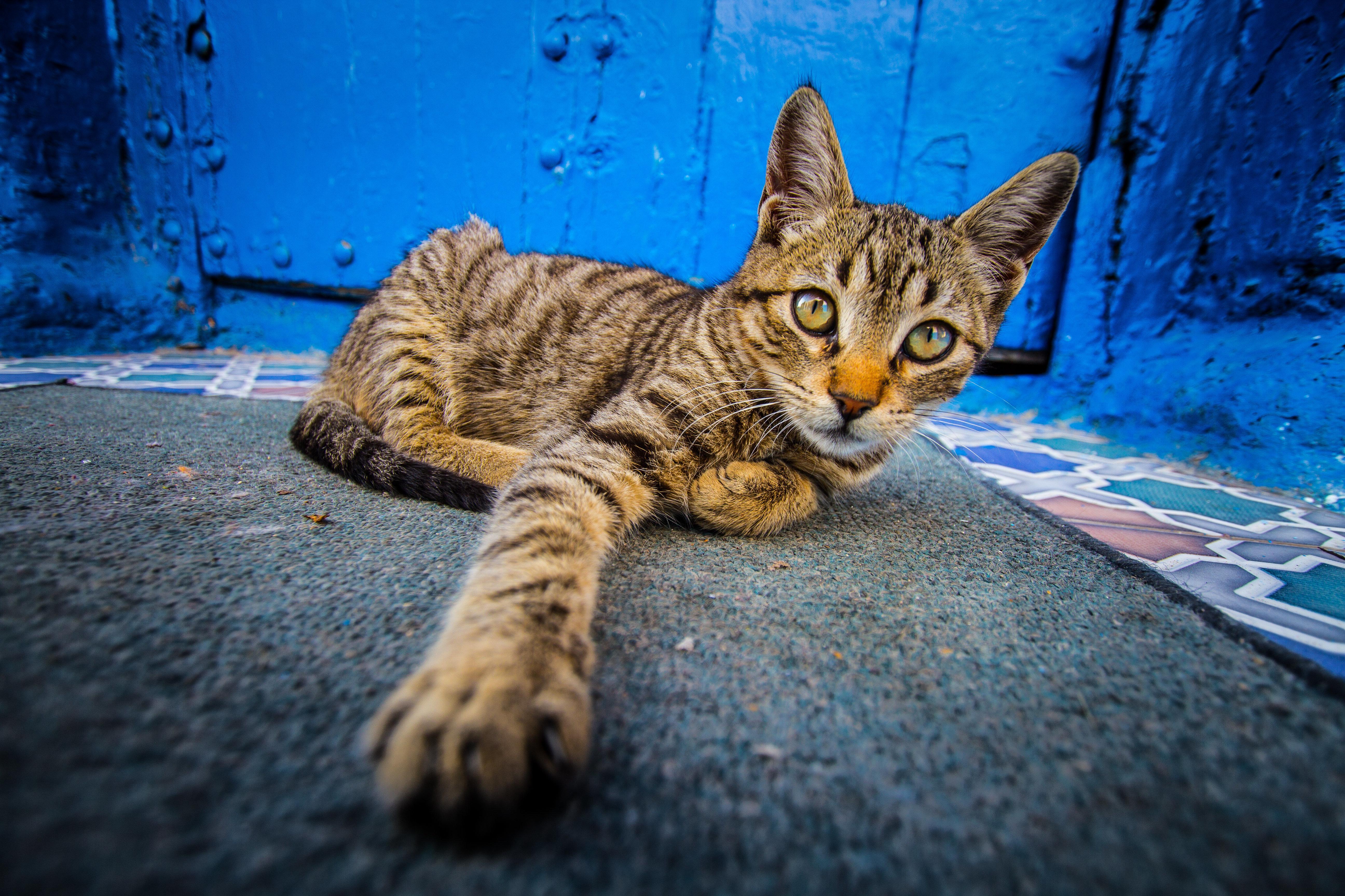Les ressortissants britanniques alertés après le décès au Maroc d'un compatriote infecté par un chat