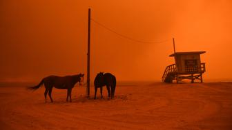 MALIBU, CA - NOVEMBER 09: Horses are yied to a pole on the beach in Malibu as the Woolsey Fire comes down the hill Friday. (Photo by Wally Skalij/Los Angeles Times via Getty Images)