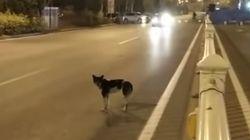 이 개는 80일이 넘도록 죽은 주인을 기다리고