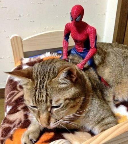 Γατάκι ...Spiderman σε ομαλή προσγείωση από το δεύτερο