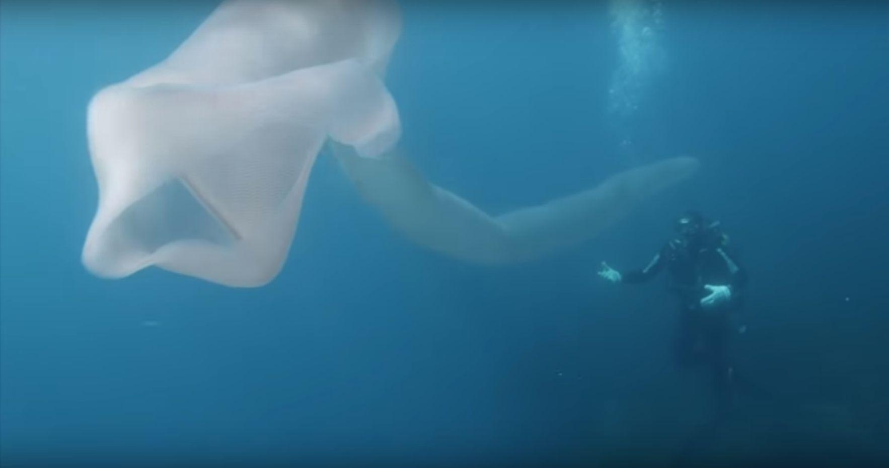 뉴질랜드 바다에서 발견된 길고 하얀 바다생물의 정체