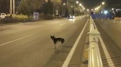Hund wartet jeden Tag auf seine Besitzerin an der Unfallstelle, an der sie vor 85 Tagen
