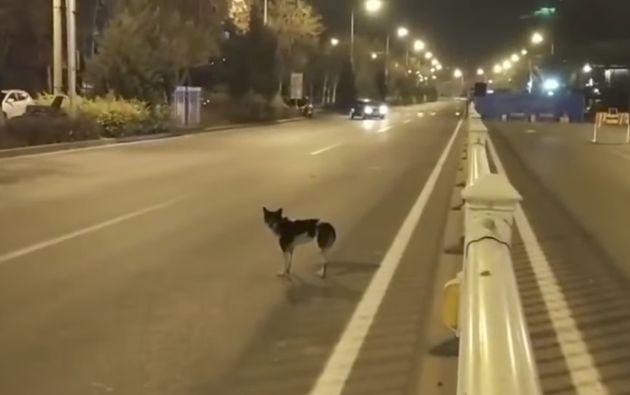 Der Hund wird jeden Tag auf der Straße