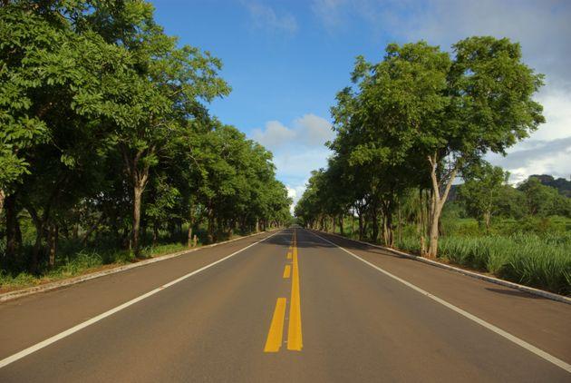 BR-262: Ο δρόμος χωρίς επιστροφή για τα ζώα της ζούγκλας- 2.200 άγρια ζώα νεκρά από