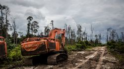 Greenpeace ne veut plus d'Oreo