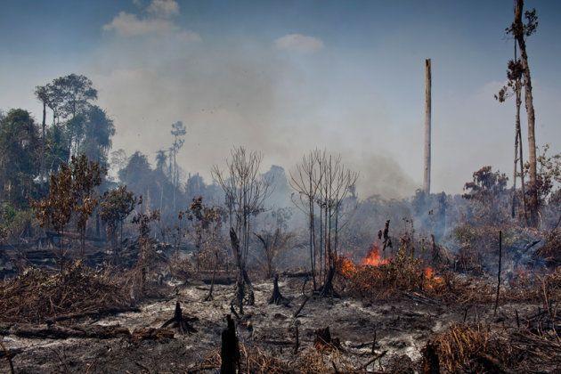 Feux de forêts observés dans la province de Riau, sur l'île de Sumatra, en Indonésie....