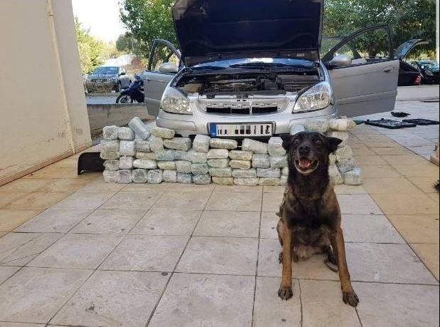 Η Χάνι εν δράσει: Δείτε το σκυλάκι της ΕΛ.ΑΣ. να ανακαλύπει 32 κιλά κάνναβης σε