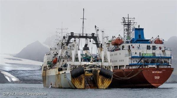 남극해 리빙스턴 아일랜드에서 목격한 크릴 어선 두