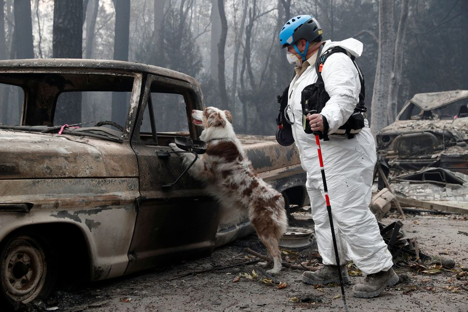 Trish Moutard, of Sacramento, searches for human remains with her cadaver dog in a truck destroyed by...