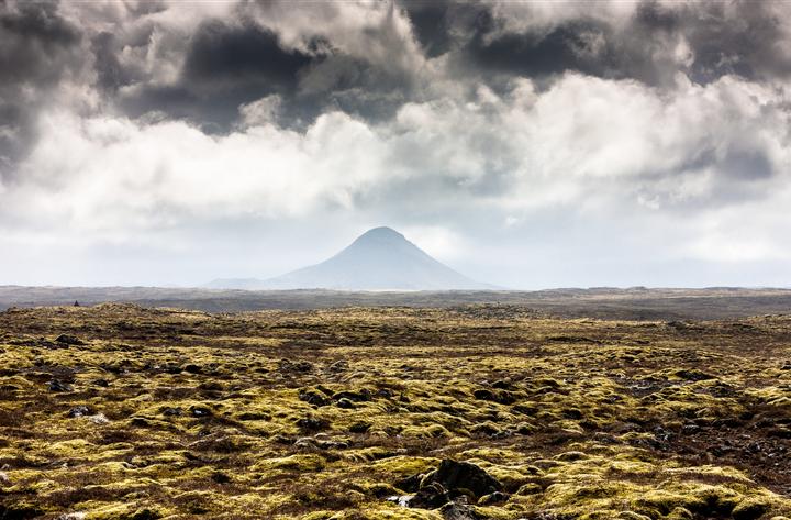 Icelandic moss field